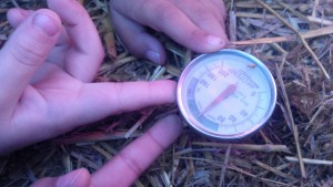 "compost thermometer used to monitor ""hot pile"""